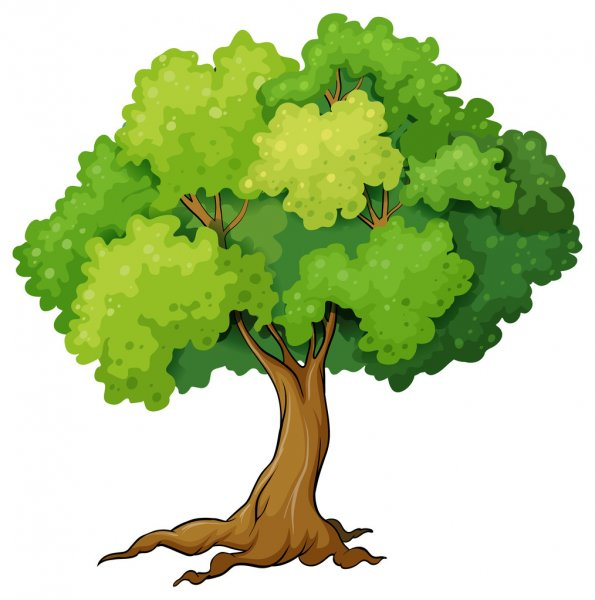 Rôle et gestion durable des arbres et arbustes en ville